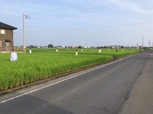 太田市 マネキン